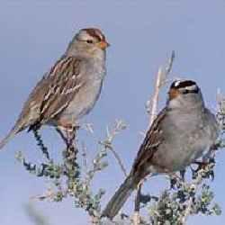 west nile virus bird listing